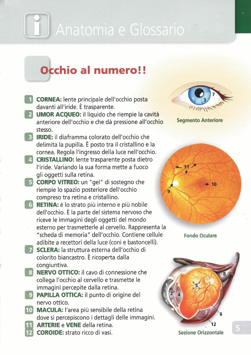 retinopatiadiabetica5